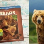 Disneynature Bears now available on Blu ray and DVD + Giveaway